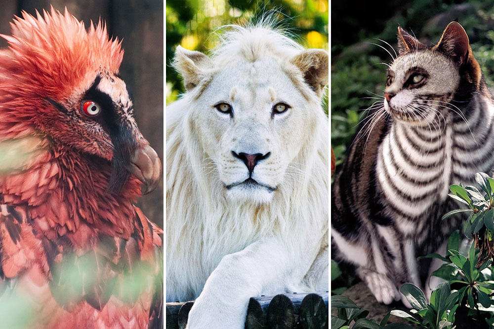Expensive & Exotic Pets Of The Rich And Famous – Popular
