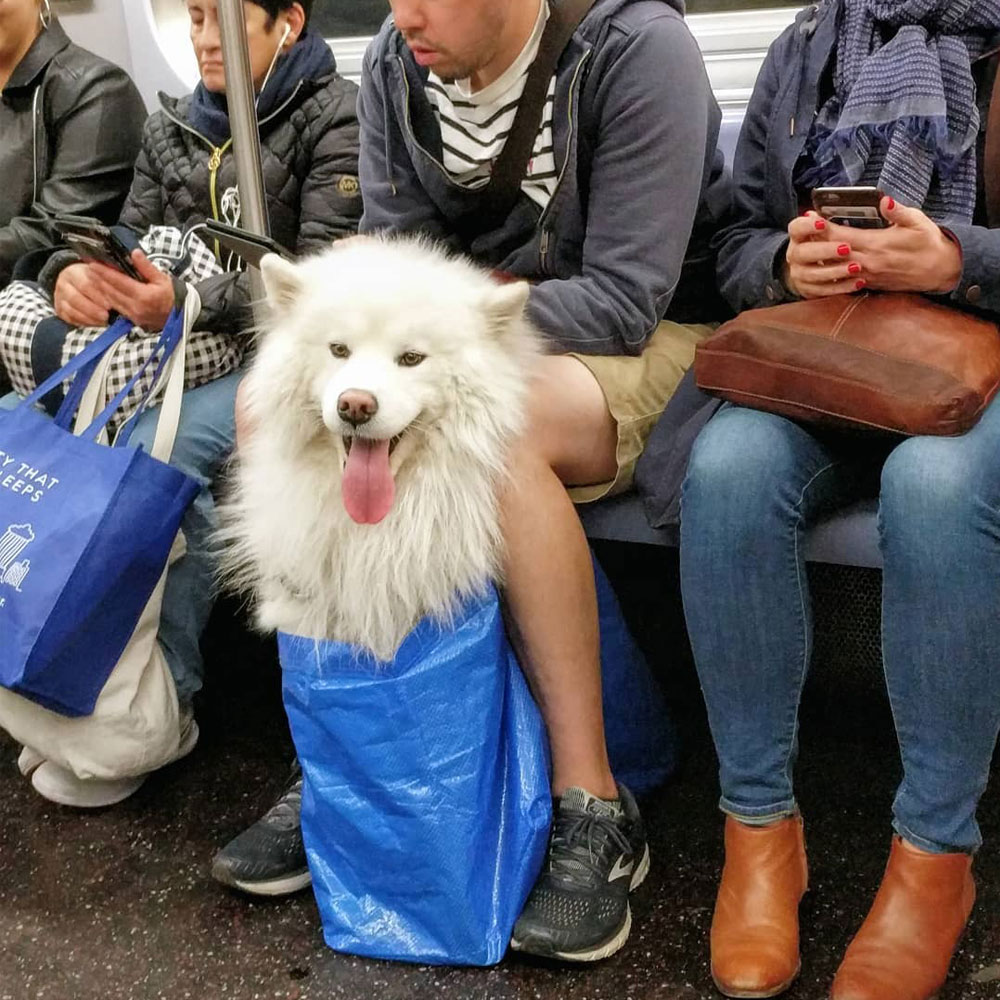 Nyc Subway Banned Dogs Unless They Fit in a Bag. Local Commuters Found the Most Creative Loop Hole 25